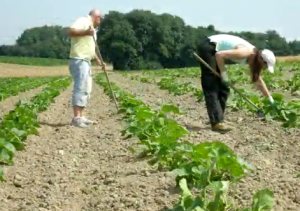 jardin potager bio lausanne 300x211 Jardin Potager Bio : La coopérative : une belle initiative Suisse